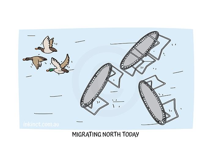 2021-195P MIGRATING NORTH TODAY - MSC 10-Jun-21 copy